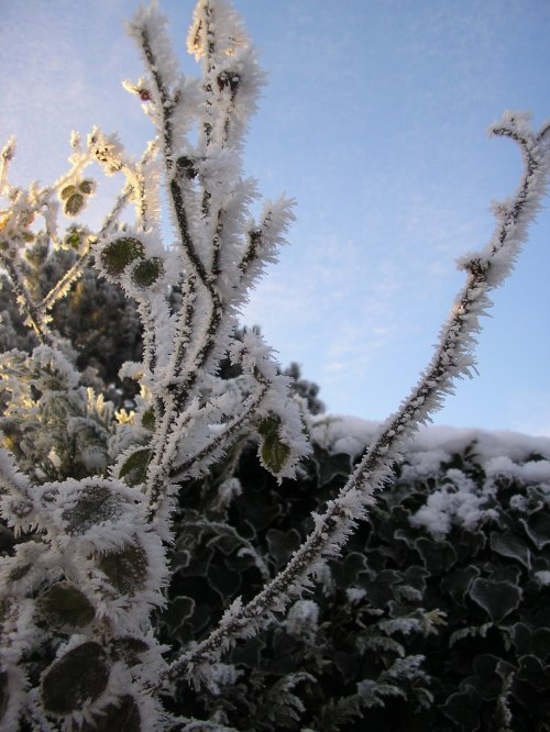 Icy prickles #1