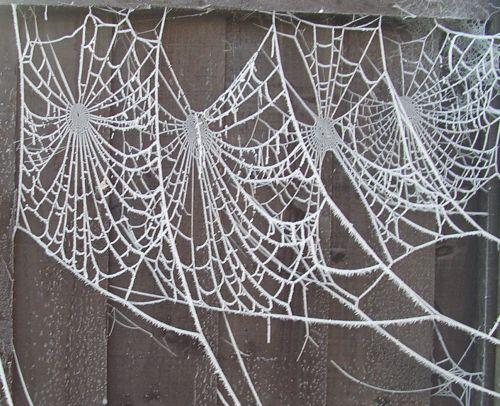 Frosty web art