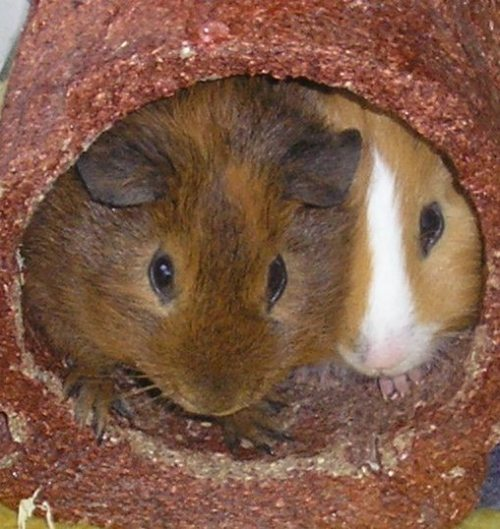 Meet your narrator! Yipyap (left) and Kip (right) in their favourite plaything, the edible tunnel.