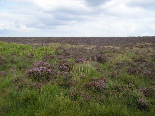 Still on the moors... the heather was just on the verge of erupting. I bet it'll be all purple there now.
